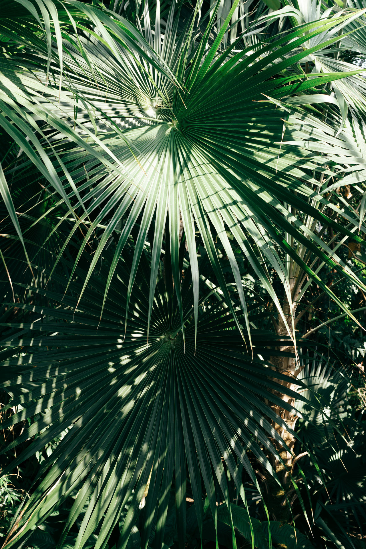 Close-up Green Green Color Growth Leaf Nature No People Outdoors Palm Tree Plant Plants