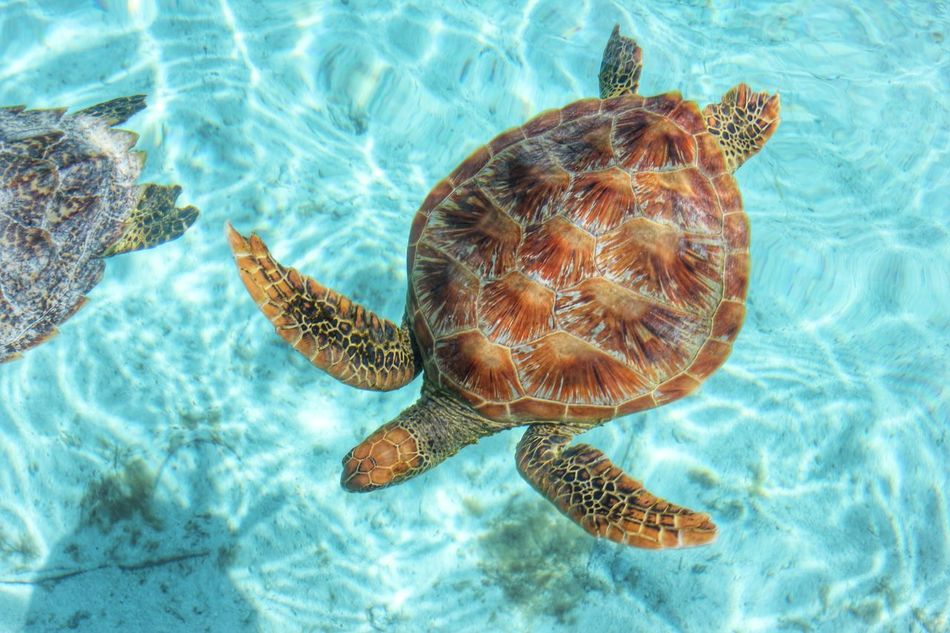 Beautiful stock photos of turtle, Animal Shell, Animal Themes, Animals In The Wild, Beauty In Nature
