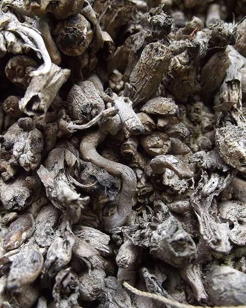 Bark Treebark Tree Macro I_macro_i Vsco_macro Grey 9vaga_twisted9 Frimleypark Nature Wmm_brown