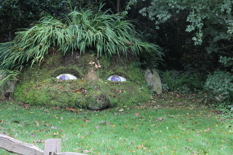 Animal Themes Beauty In Nature Day Flower Grass Growth Lost Gardens Of Heligan Nature No People Outdoors Plant Tree UnderSea Water