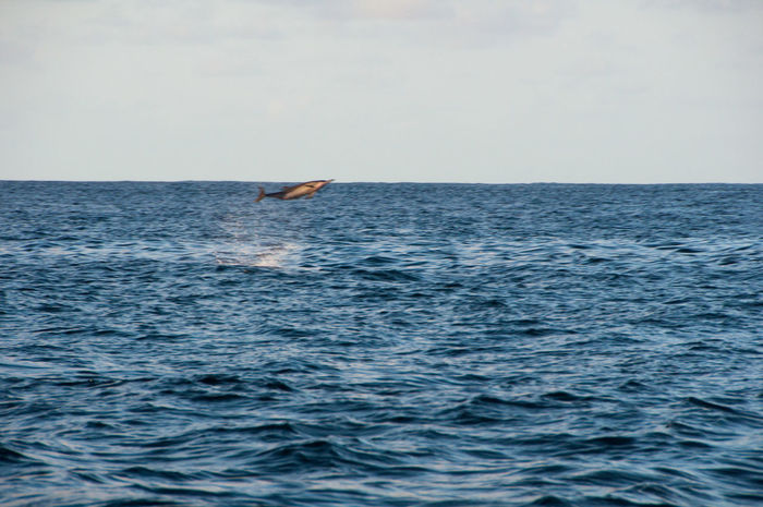 Beach Distant Dolphin Dolphins Escapism Getting Away From It All Horizon Over Water Maldives Motion Ocean Outdoors Rippled Sea Seascape Shore Splashing Surf Vacations Water Waterfront Wave Weekend Activities