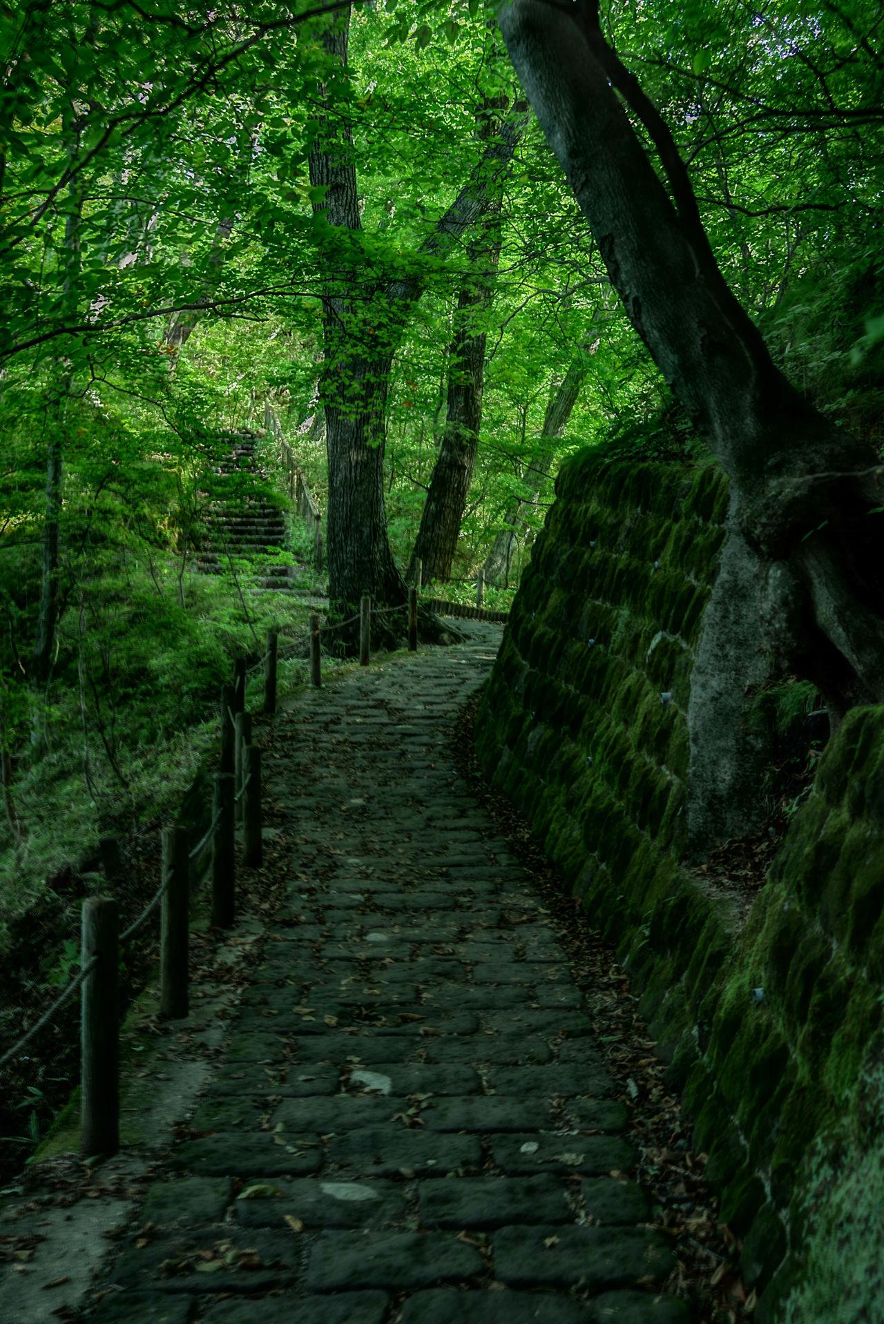 霧降の滝 に向かう歩道はこんな感じ。ちょっと薄暗いけど、豪快な滝の音がしてて旅行に来てるんだなって改めて思った。 Green Green Color Nature Woods 日光 Beautiful Japan Nice View 山のレストラン 霧降高原 Nature Photography Nature HDR HDR Collection Hdr_gallery