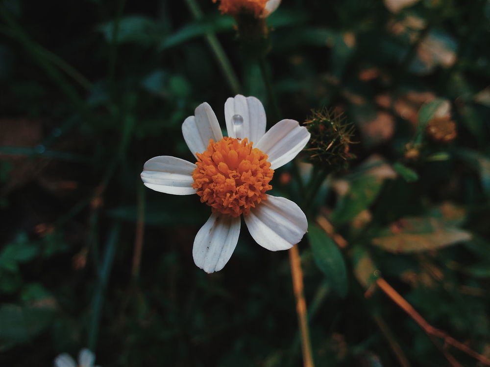 Plants And Flowers Flower Flowers, Nature And Beauty Flower Photography Beauty In Nature Nature Vscocam Photography Photoshoot Somewhereinvietnam Taking Photos
