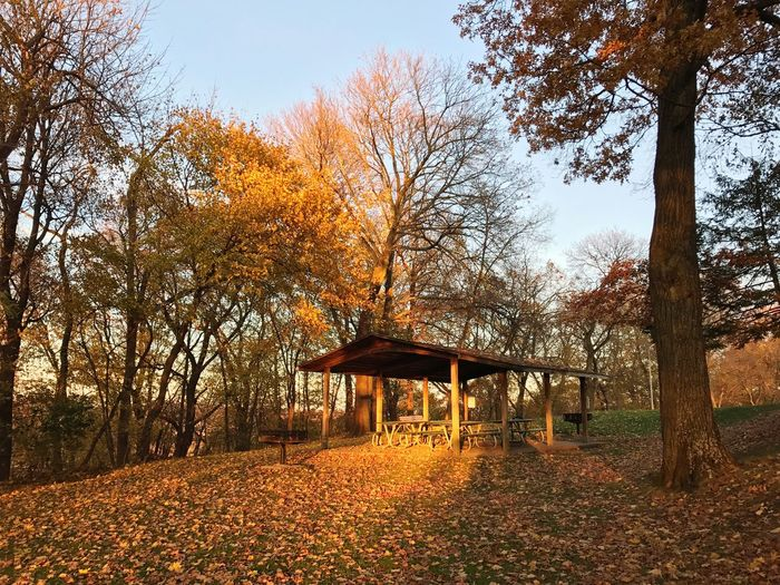 Tree Built Structure Nature Autumn Architecture No People Beauty In Nature Outdoors Pavilion Growth Day Gazebo Sky