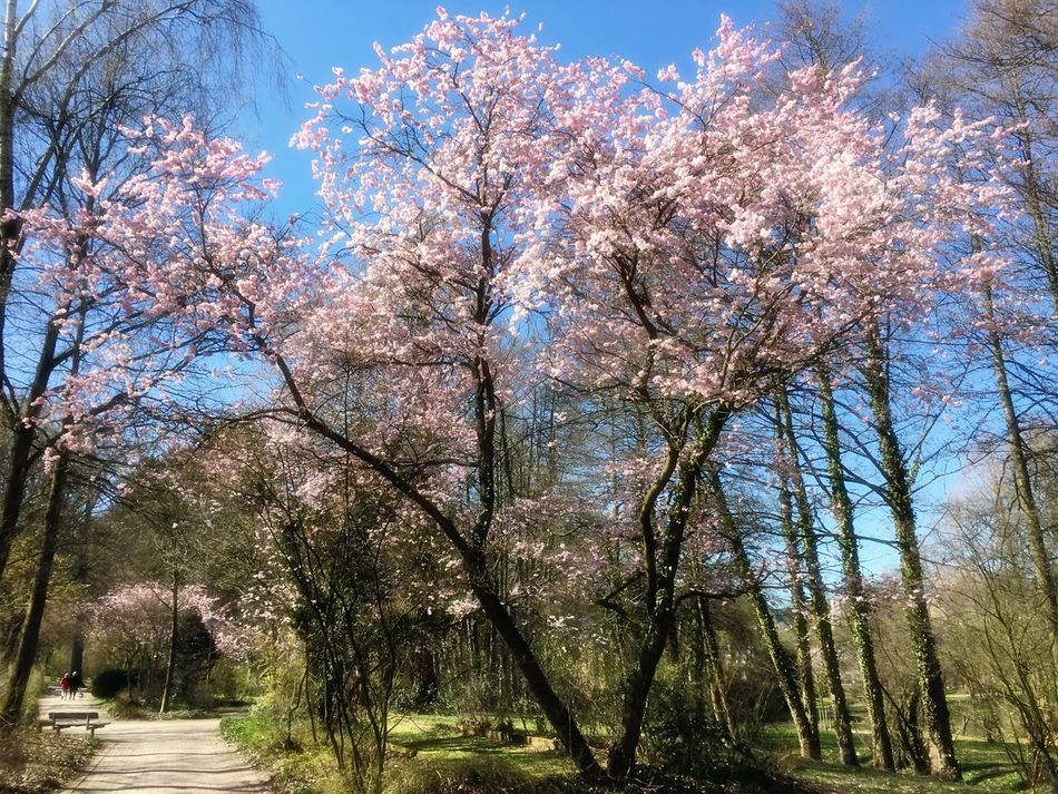 Almond Tree Beauty In Nature Blossom Blossom Tree Blossoms  Branch Cherry Tree Cultures Day Flourish Flourishing Flower Fragility Freshness Growth Nature No People Outdoors Scenics Sky Spring Spring 2017 Spring Has Arrived Springtime Tree