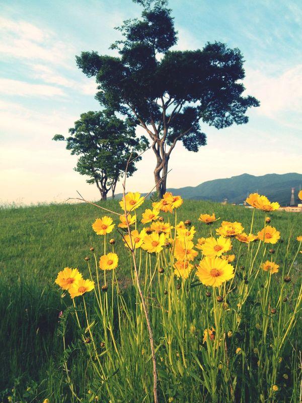 호포 생태공원 꽃 나무 초여름 소풍 나른한오후 맑음