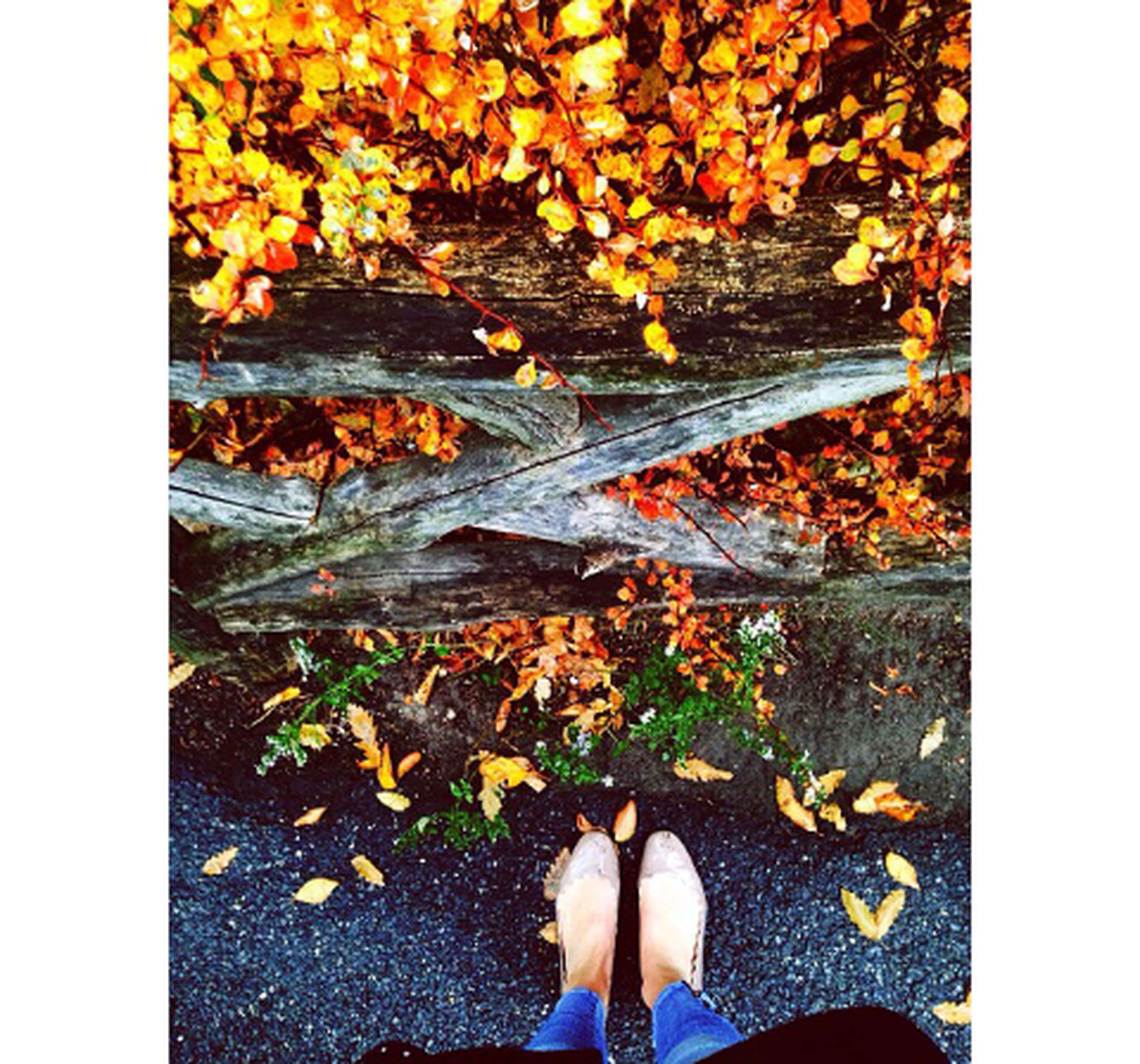 low section, person, personal perspective, autumn, transfer print, human foot, shoe, leaf, standing, change, auto post production filter, leaves, fallen, high angle view, unrecognizable person, dry, season