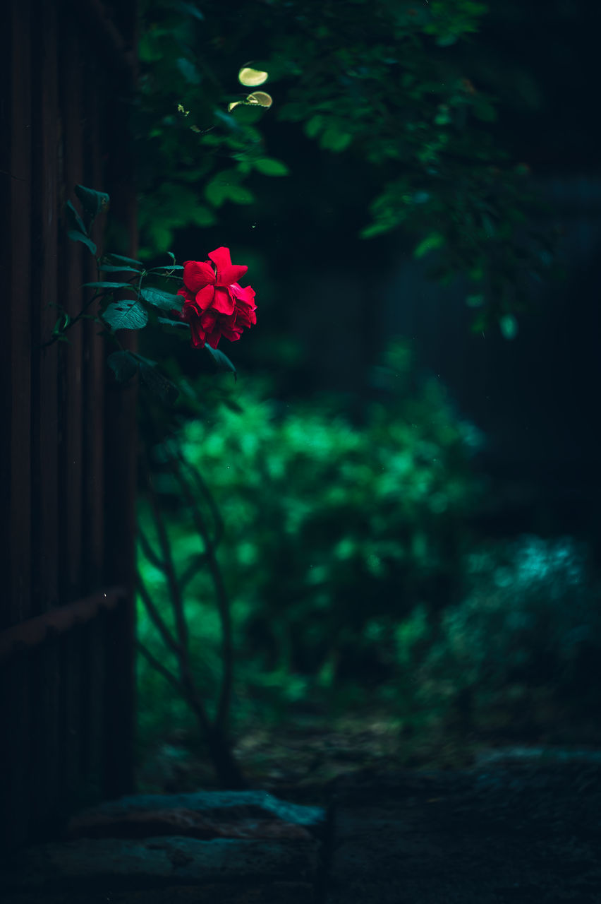 growth, flower, plant, nature, no people, outdoors, focus on foreground, beauty in nature, tree, day, fragility, freshness, close-up, flower head