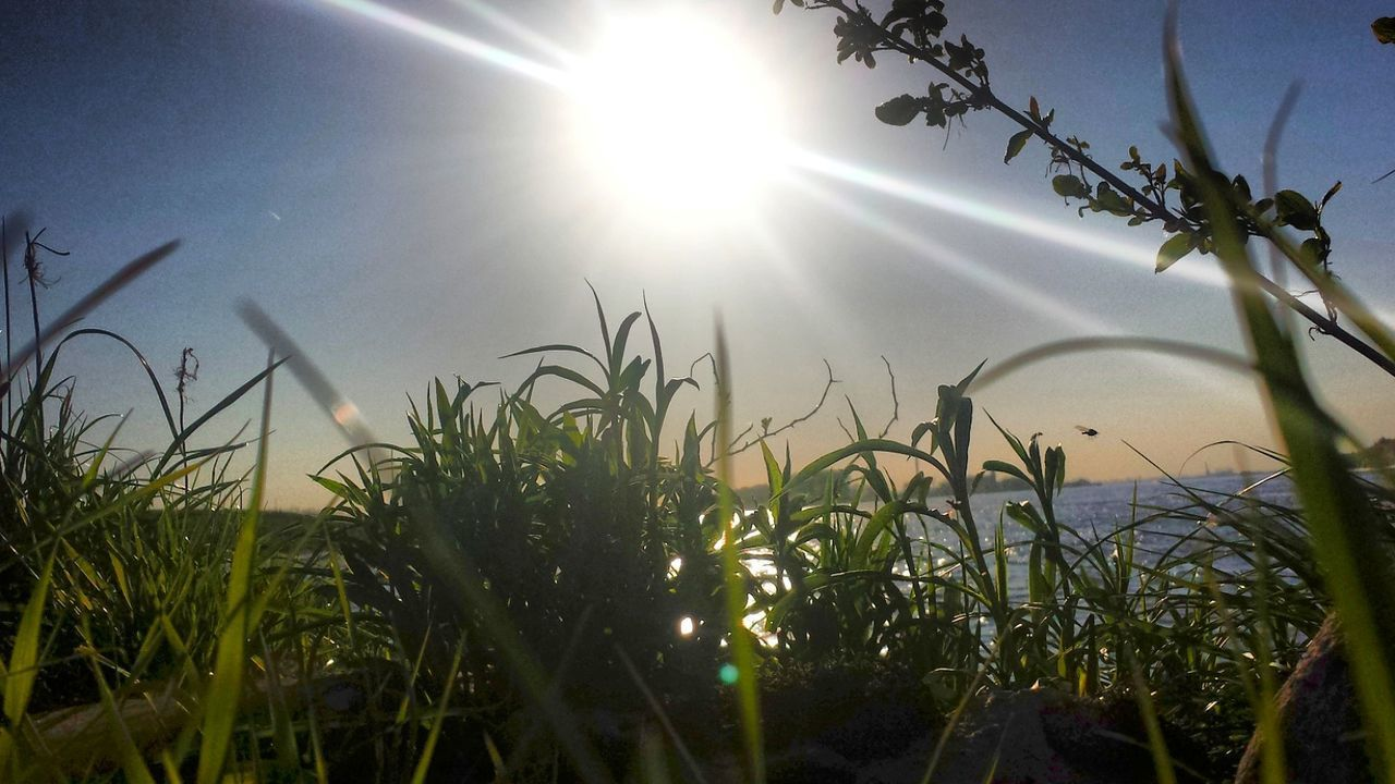 sun, sunbeam, lens flare, sunlight, growth, plant, nature, bright, sunny, beauty in nature, no people, grass, day, tranquility, outdoors, sky, freshness, close-up