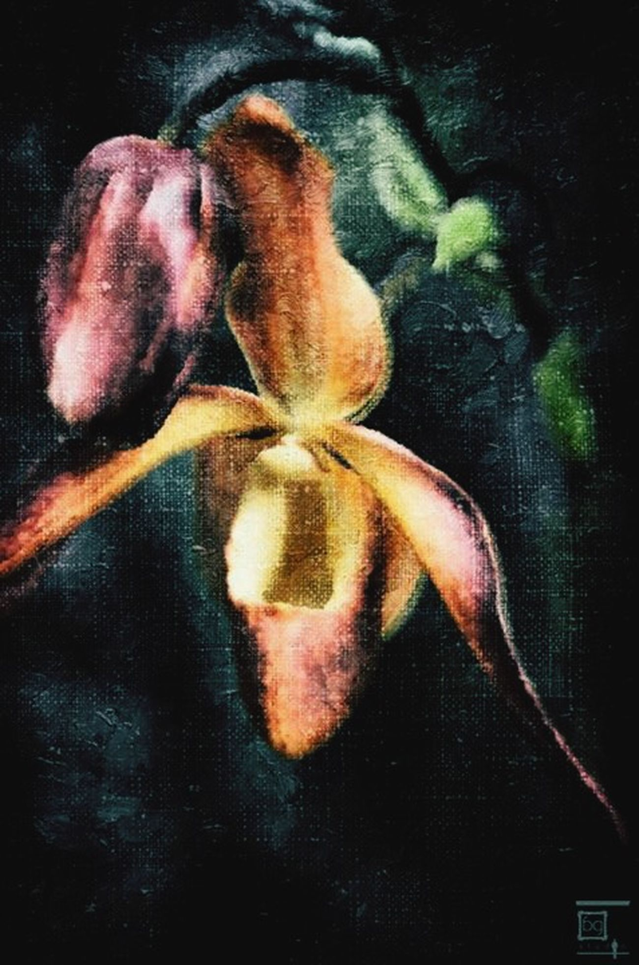 Photograph Into Painting Orchid Flower Spring Outdoors Canvas Painting