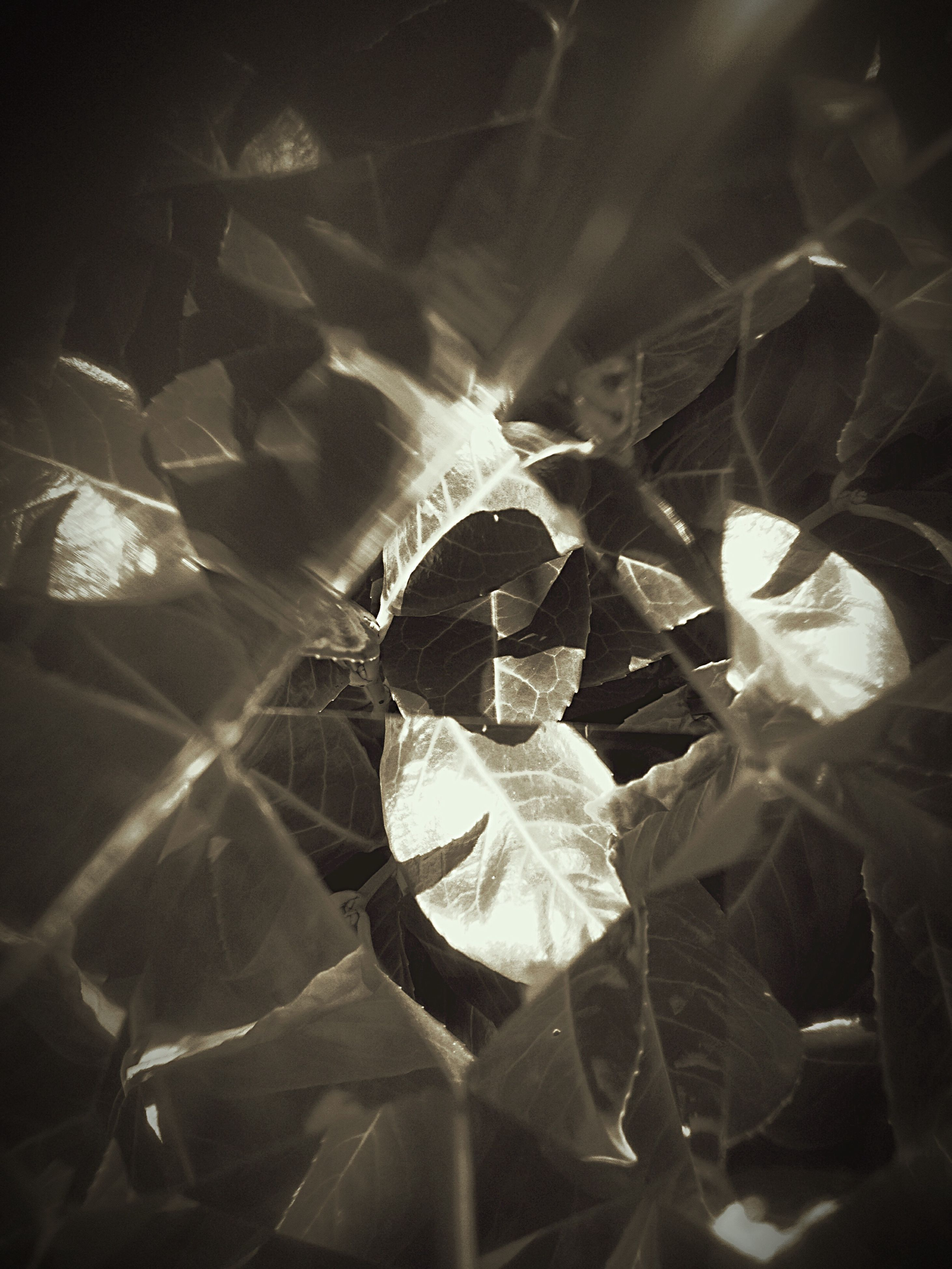 indoors, close-up, leaf, pattern, high angle view, fragility, night, plant, no people, nature, leaf vein, sunlight, dark, shape, full frame, design, backgrounds, growth, natural pattern