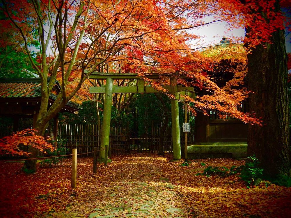 Kyoto Japan ASIA Yase Rengeji Temple Gate Tree Leaf Nature Beauty In Nature Outdoors Day Growth Autumn Leaves Autumn Olympus PEN-F