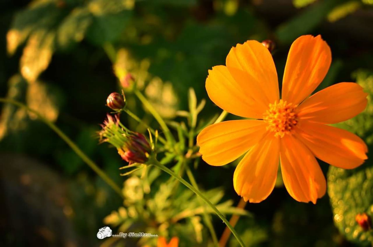 flower, nature, petal, growth, plant, beauty in nature, fragility, freshness, flower head, day, no people, focus on foreground, outdoors, close-up, animal themes, bee, blooming
