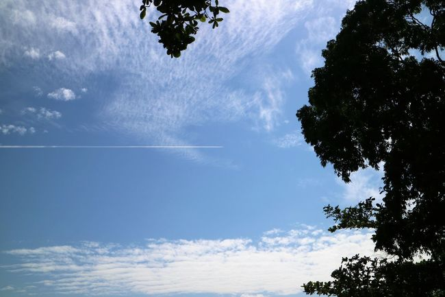 sky's not the limit Beauty In Nature Blue Cloud - Sky Day EyeEm Gallery EyeEm Gallery Nature_collection Eyeem Singapore Nature No People Non-urban Scene Outdoors Scenics Sky Tranquil Scene Tranquility Tree Vapor Trail No Edit/no Filter For The Love Of Photography Cloud_collection