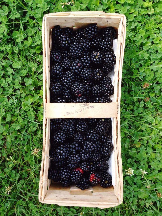 Self Cultivation Bio Garden Photography Garden Brombeeren Fruit Blackberry Basket Harvest
