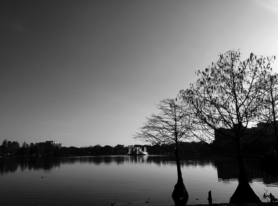 Lake Eola Park in the morning Water Silhouette Tree Lake Sky Nature No People Outdoors Day Beauty In Nature Florida Bratini Leonidas Landscape Orlando Cityscape