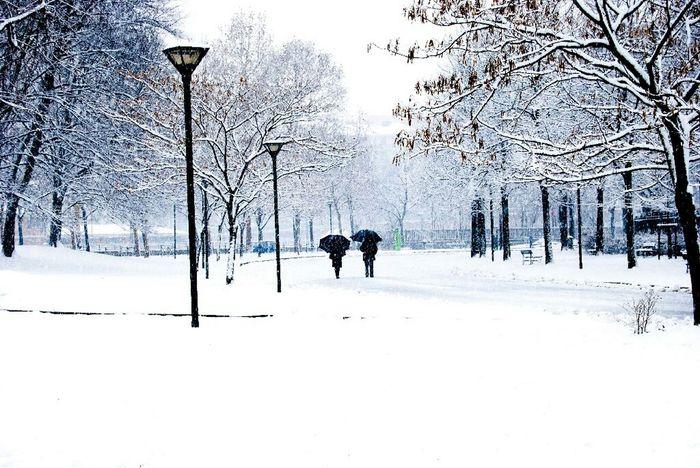 Winter Snow Urban Landscape