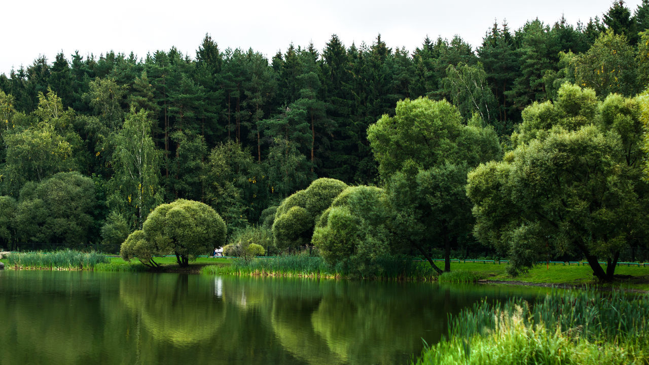 Beauty In Nature Day Forest Green Color Idyllic Lake Landscape Lush - Description Lush Foliage Nature No People Outdoors Reflection Scenics Tranquility Tree Water