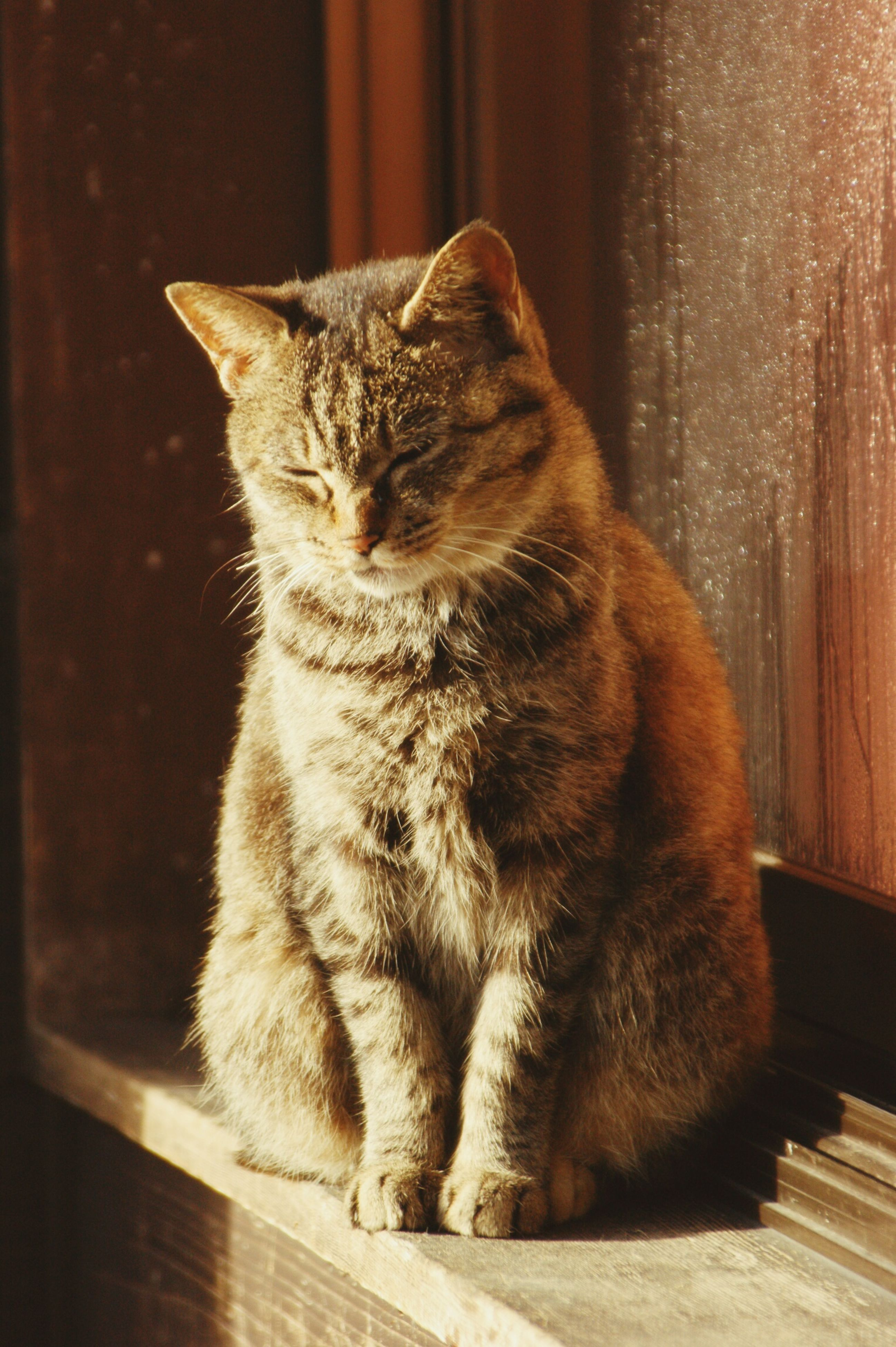 domestic cat, cat, pets, feline, one animal, mammal, animal themes, domestic animals, whisker, indoors, relaxation, sitting, looking away, close-up, full length, side view, no people, home interior, resting, lying down