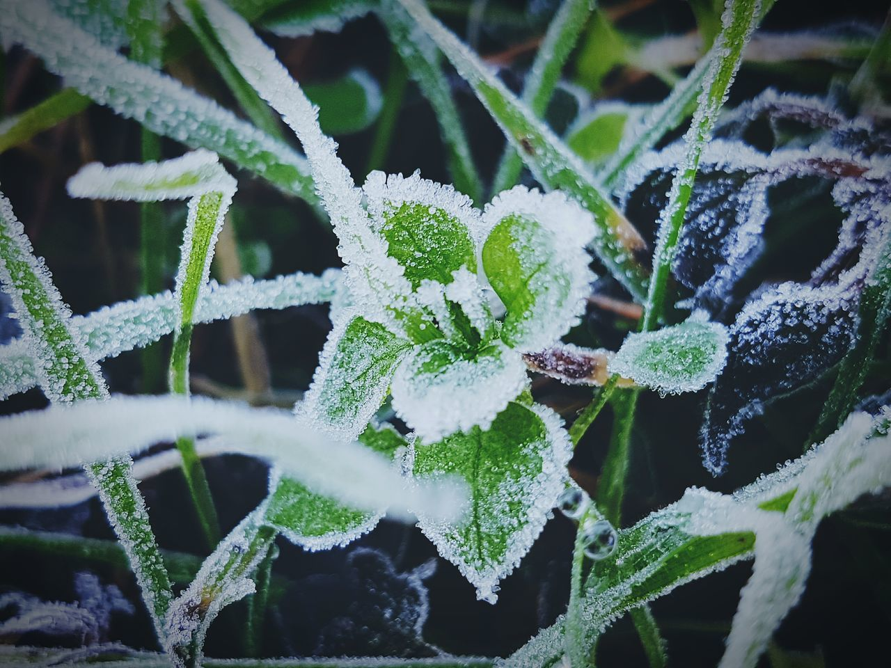 plant, green color, nature, beauty in nature, winter, no people, close-up, leaf, cold temperature, outdoors, frozen, snow, growth, day, focus on foreground, high angle view, freshness, fragility, water