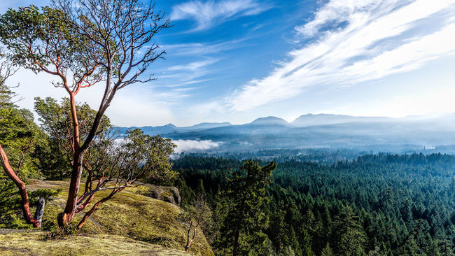 Arbutus Beauty In Nature Cloud - Sky Day Growth Horizontal Lush - Description Madrona Tree Mountain Nature No People Outdoors Scenics Sky Tranquility Tree Water