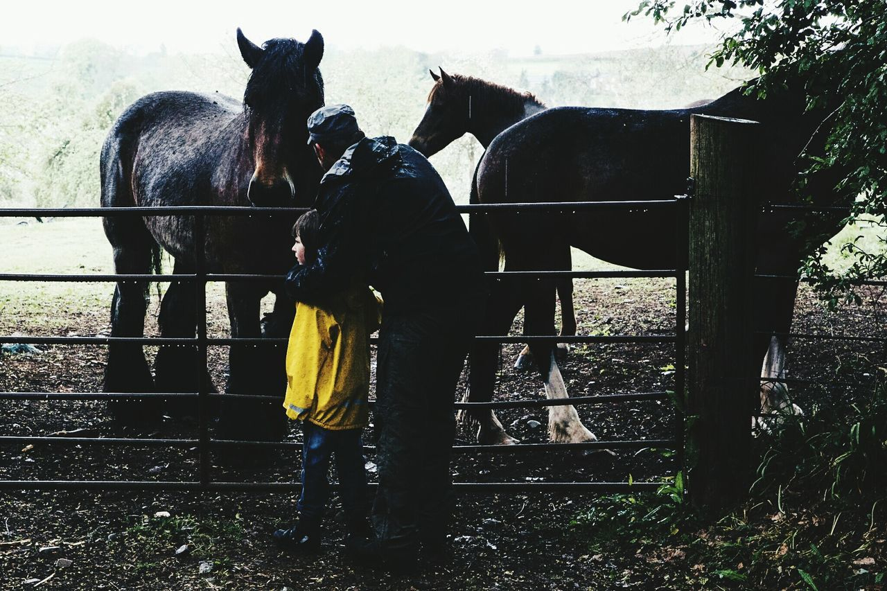 Horse Agriculture People Livestock Outdoors Rural Scene Full Length Paddock Standing Day Lauraloophotography