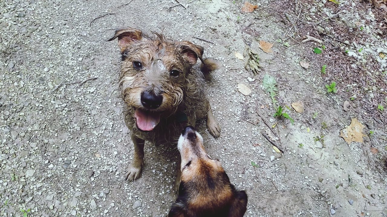 Enjoying Life Muddy My Dogs Are Cooler Than Your Kids Down And Dirty I Love Dogs Simple Things In Life Critter Love