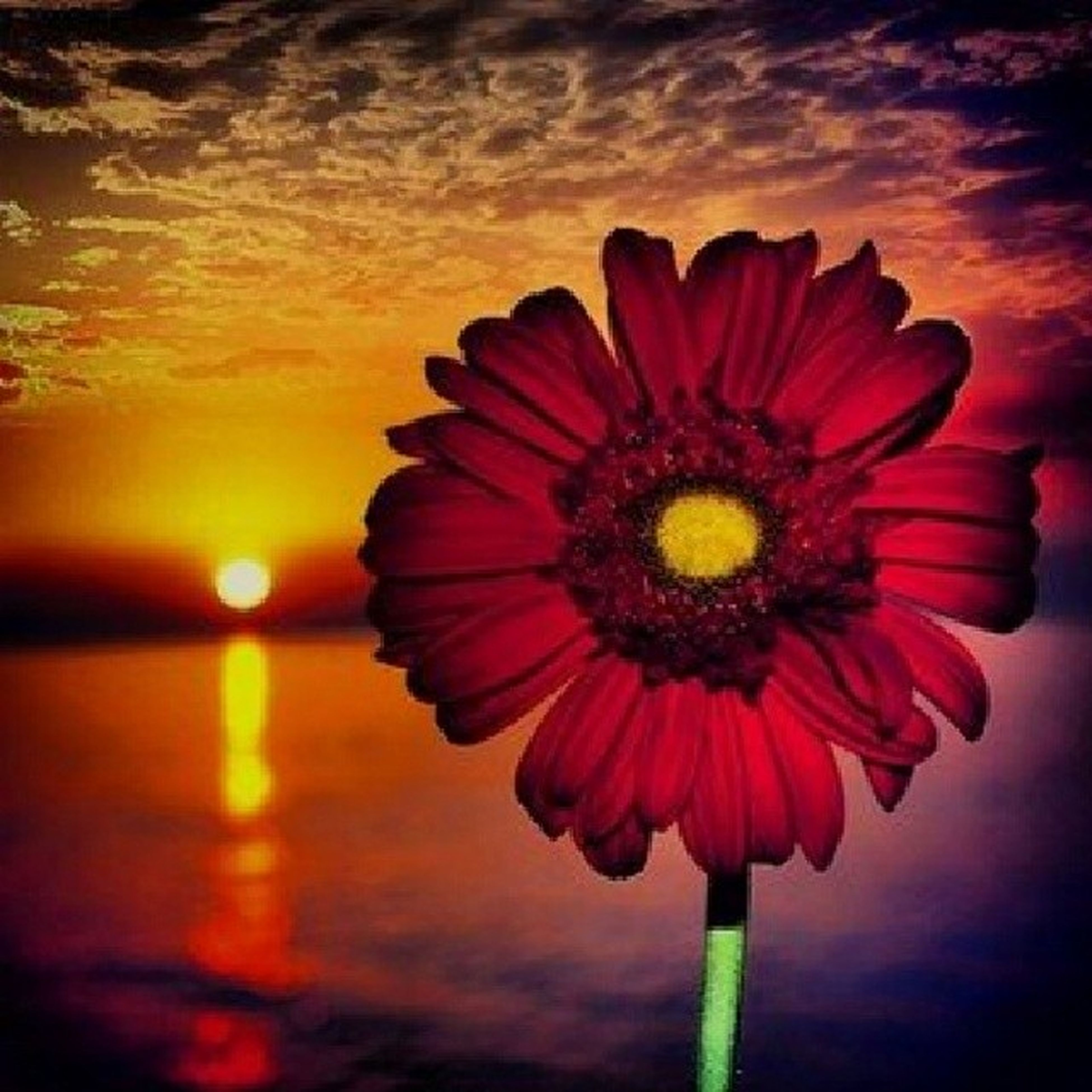 flower, petal, freshness, flower head, fragility, beauty in nature, growth, pollen, nature, single flower, blooming, close-up, red, sky, yellow, orange color, stem, sunset, plant, in bloom
