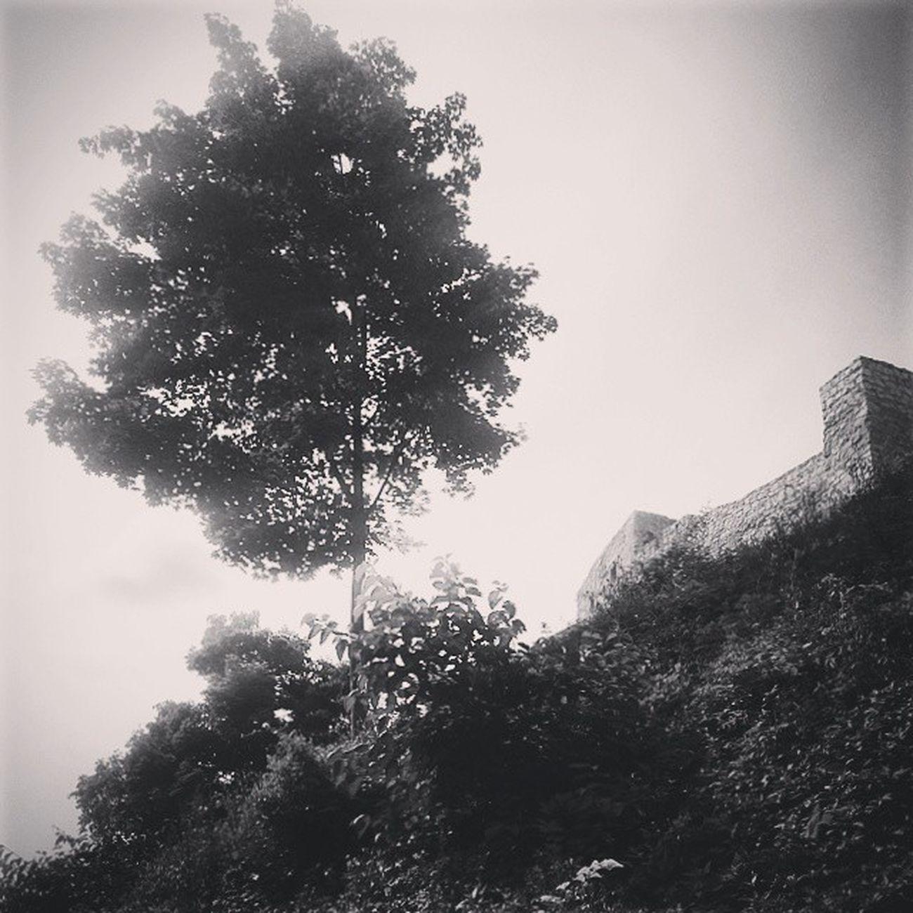 Kazimierzdolny Ruins Castle
