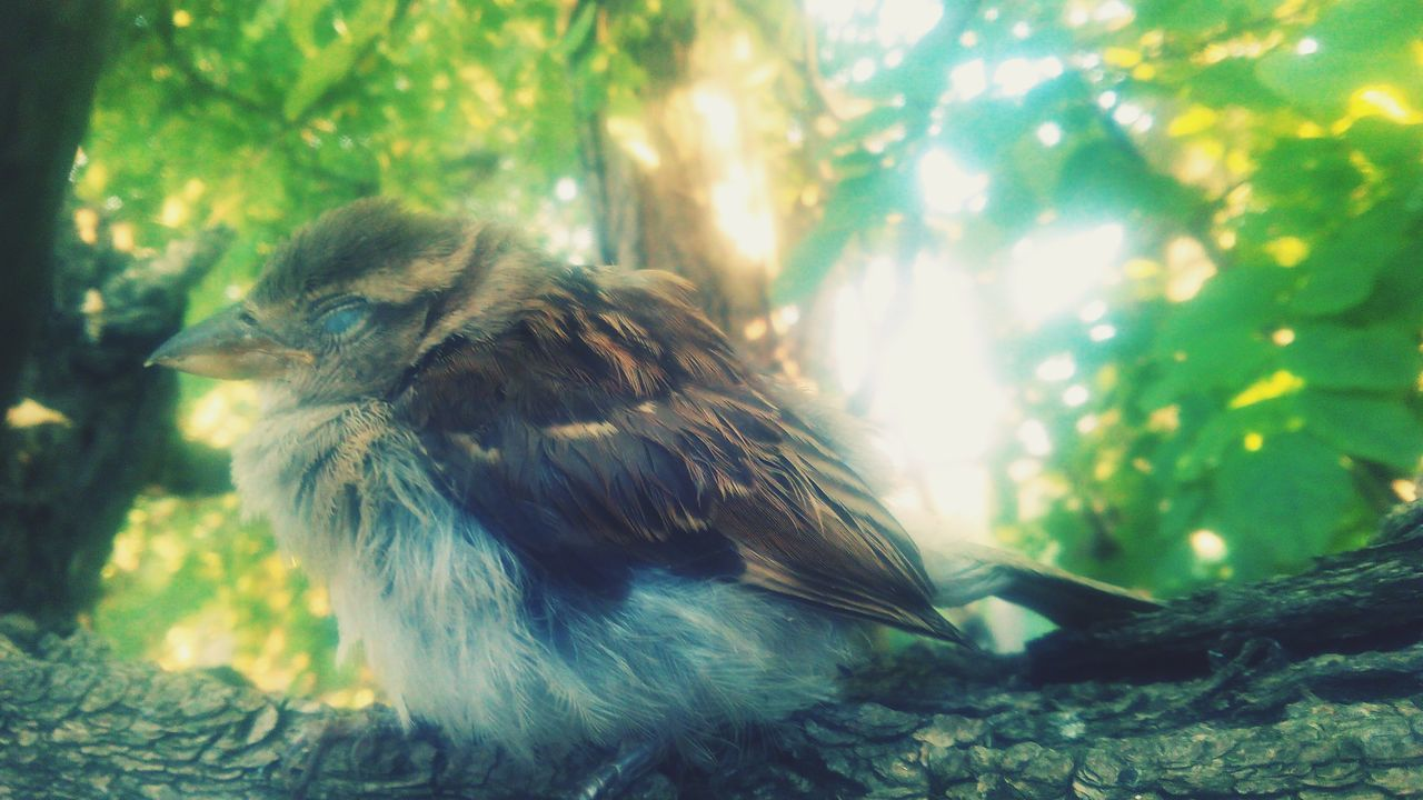bird, animal themes, one animal, animals in the wild, nature, day, focus on foreground, no people, outdoors, tree, close-up