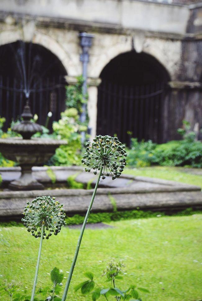 Flowers Plant Leaves Garden Rain Raindrops Rainy Day Westminster Cloister in London, United Kingdom