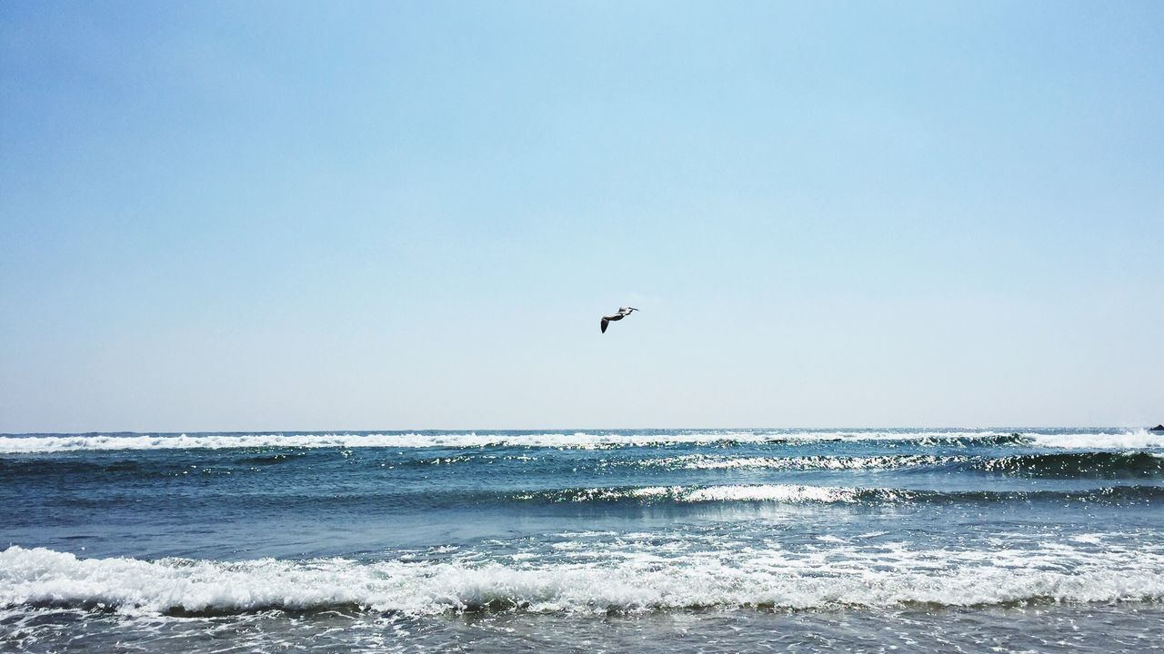 The Essence Of Summer Beach Seagull Ocean Atlantic Ocean Blue Summer Holiday