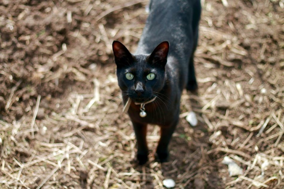 Beautiful stock photos of cat, Animal Themes, Black Color, Cat, Day