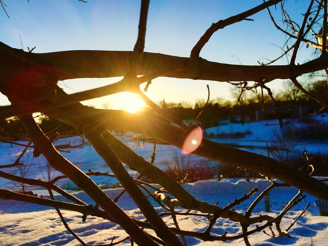 Winter's end Sun Sunset Showcase April Tree Cold Winter Trees Sunlight Frizen frozen Frozen Frozen Nature Winter Trees Cold Temperature Cold Days Canada Quebec Colour Of Life