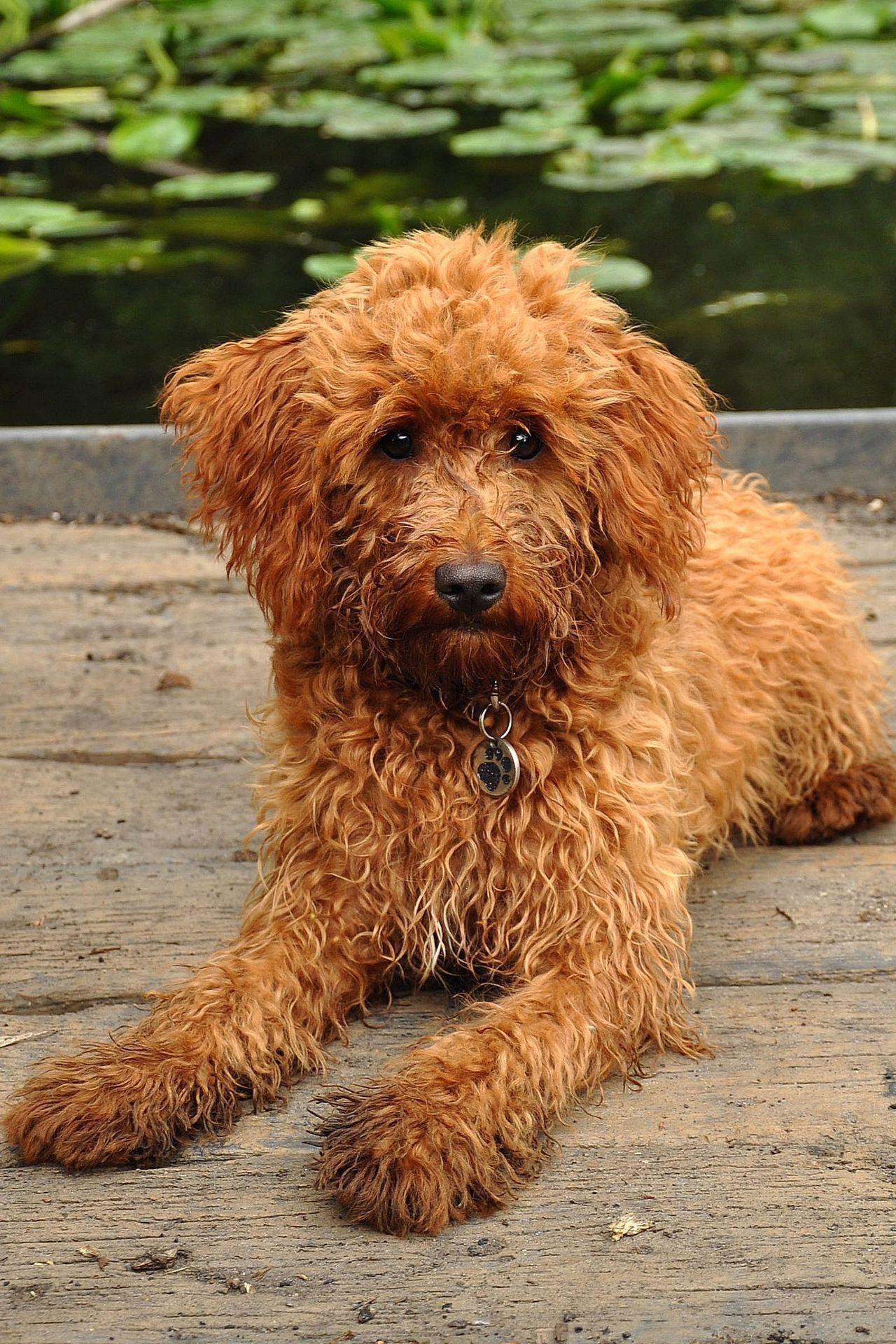 Beautiful stock photos of welpen, Animal Hair, Animal Themes, Brown, Canine