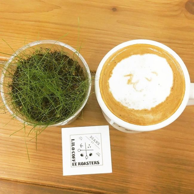 "Coffee Cafe Instacoffee Cafelife Caffeine Coffeeaddict Coffeegram Coffeeoftheday Cotd Coffeelover Coffeelovers Coffeeholic Coffiecup Coffeelove Coffeemug Coffeeholic Coffeelife Lilocoffee 大阪 Liloは水曜日 * ソイラテ をオーダー☺ 今まで色んなお店で、牛乳の方のラテ間違って出てきたらどうしようって思ってたけど……😅🌀 これは間違いないね🙆 だって ""そい""って書いてある * I ordered Soylatte☺ Whenever I order Soylatte, I anxious about it's truly soy😅🌀 But that's OK🙆 That's written ""Soy"" in Japanese by latte art LOL *"