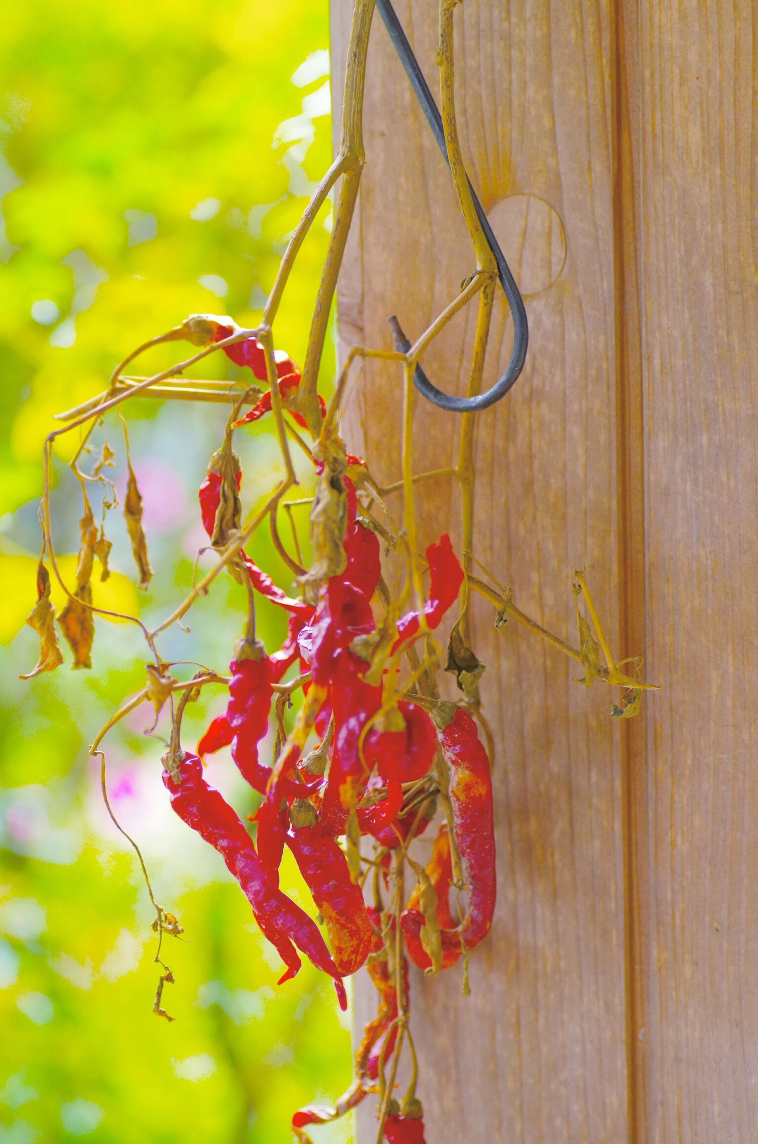 close-up, focus on foreground, growth, leaf, plant, nature, wood - material, stem, insect, flower, red, day, outdoors, beauty in nature, green color, fragility, no people, hanging, selective focus, branch