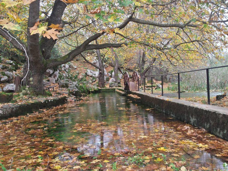 #autumn #beauty #bridge #green #leaves #Nature  #NoFilter #river