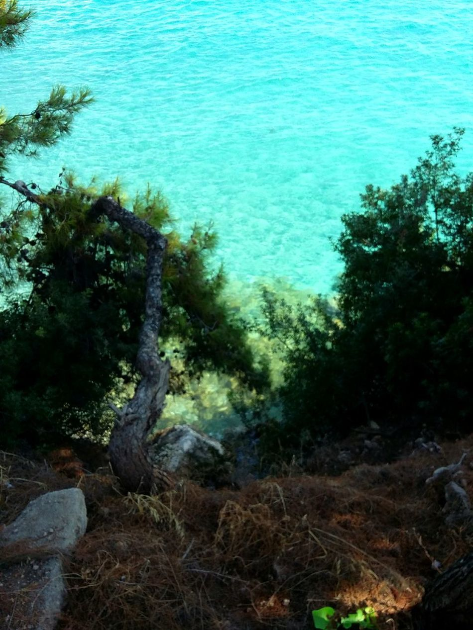 Water Nature Sea Trees And Water Tranquility Day No People Outdoors Beauty In Nature Tranquil Scene Water And Nature Idyllic Blue Water And Woods Summer Tourism Nature Purity Agistri Exploring Greece Exploring Nature