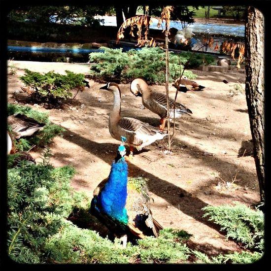Tierpark Walldorf Tierpark