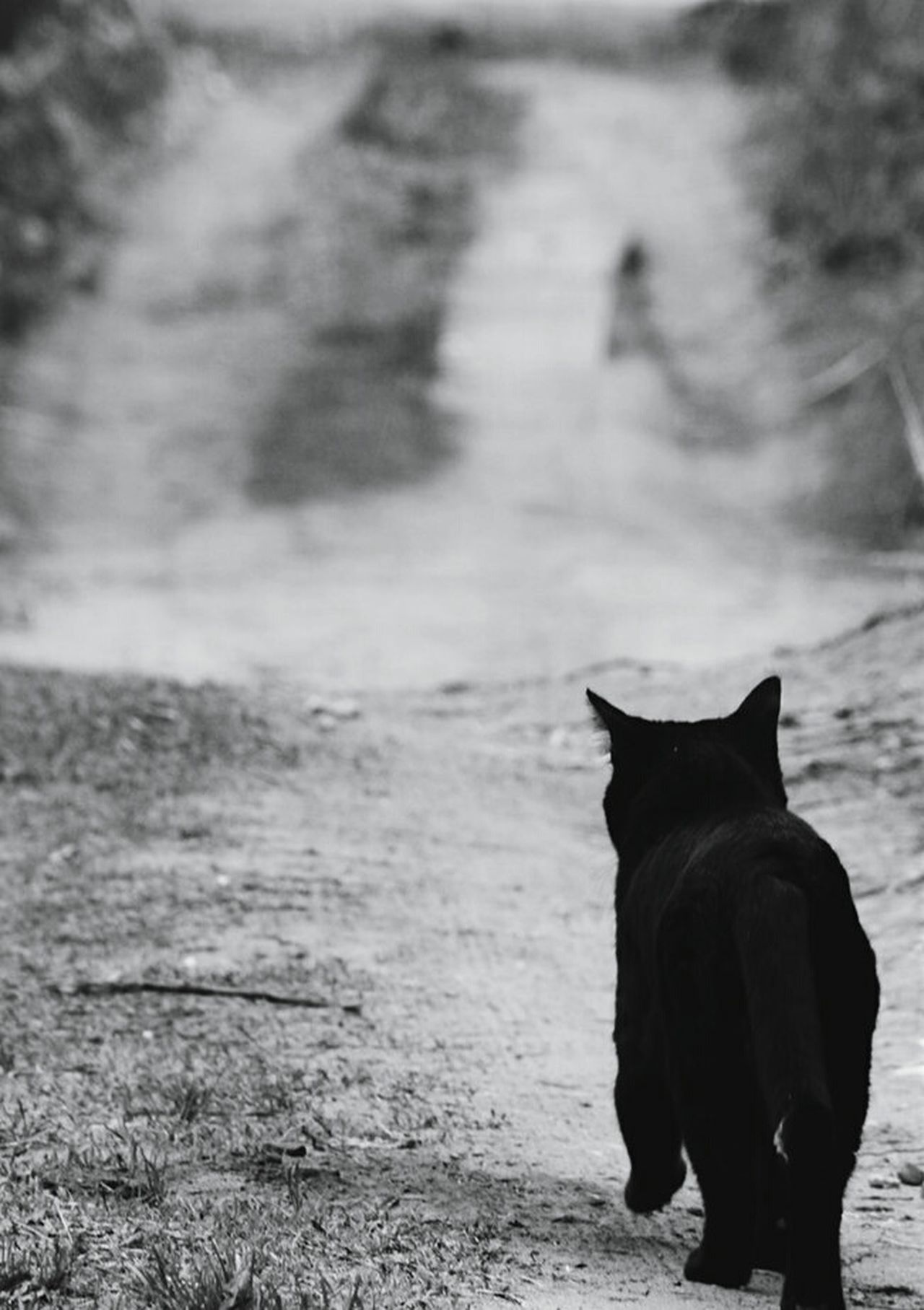 Dark Road Cat Blackandwhite Black And White Black & White Black And White Collection  Springtime Homeless Cats Homeless Sad & Lonely