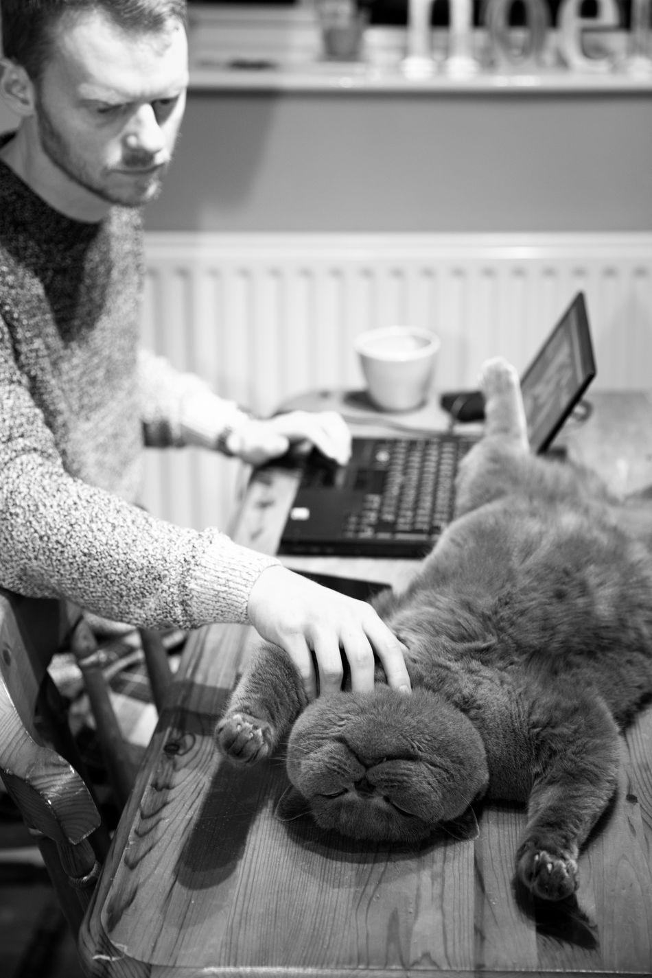Black & White Black And White Blackandwhite British Blue British Shorthair Cat Cats Freelance Life Happiness Home Laptop Meatball The Cat Table Work Working Animals