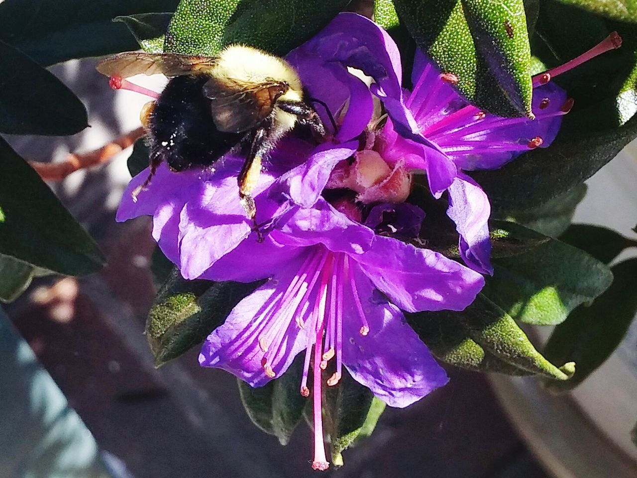 flower, insect, petal, purple, fragility, animals in the wild, animal themes, one animal, freshness, growth, flower head, nature, day, beauty in nature, plant, outdoors, no people, close-up, bee