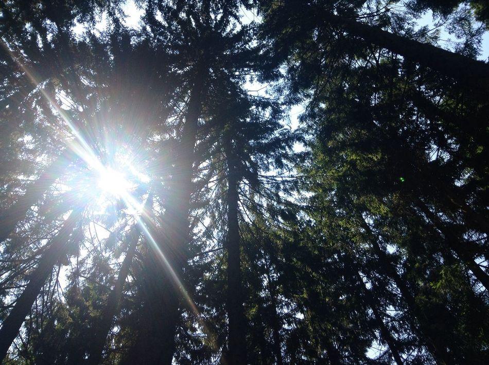 Dark and deep Woods Light Sun Trees And Sky Trees Leaves