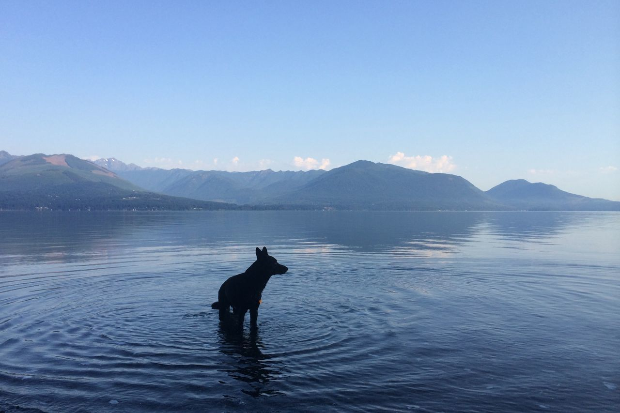 Beautiful stock photos of lake, Animal Themes, Beauty In Nature, Blue, Copy Space