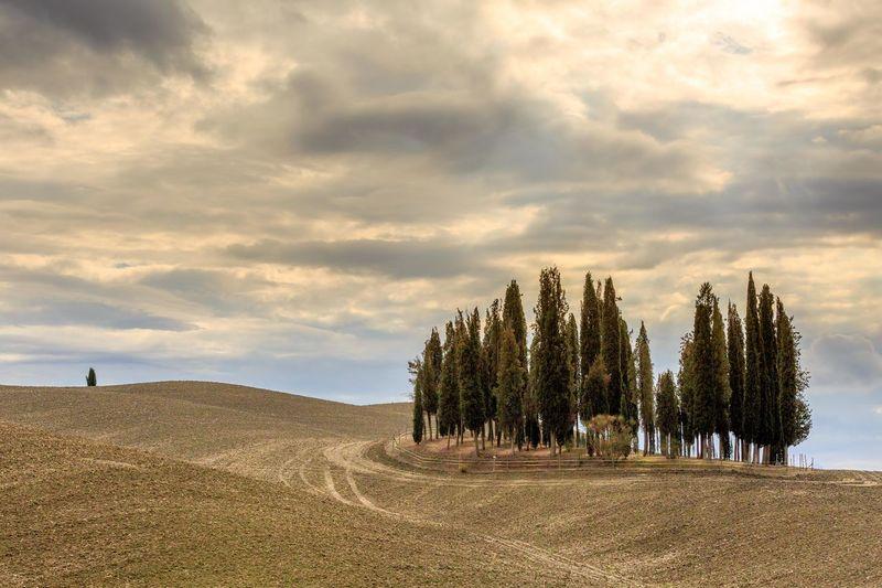 Gladiators of Tuscany Feld Italia Italien Toskana Tuscany Wolken Clouds Countryside Cypress Trees  Gladiator Mood Zypressen