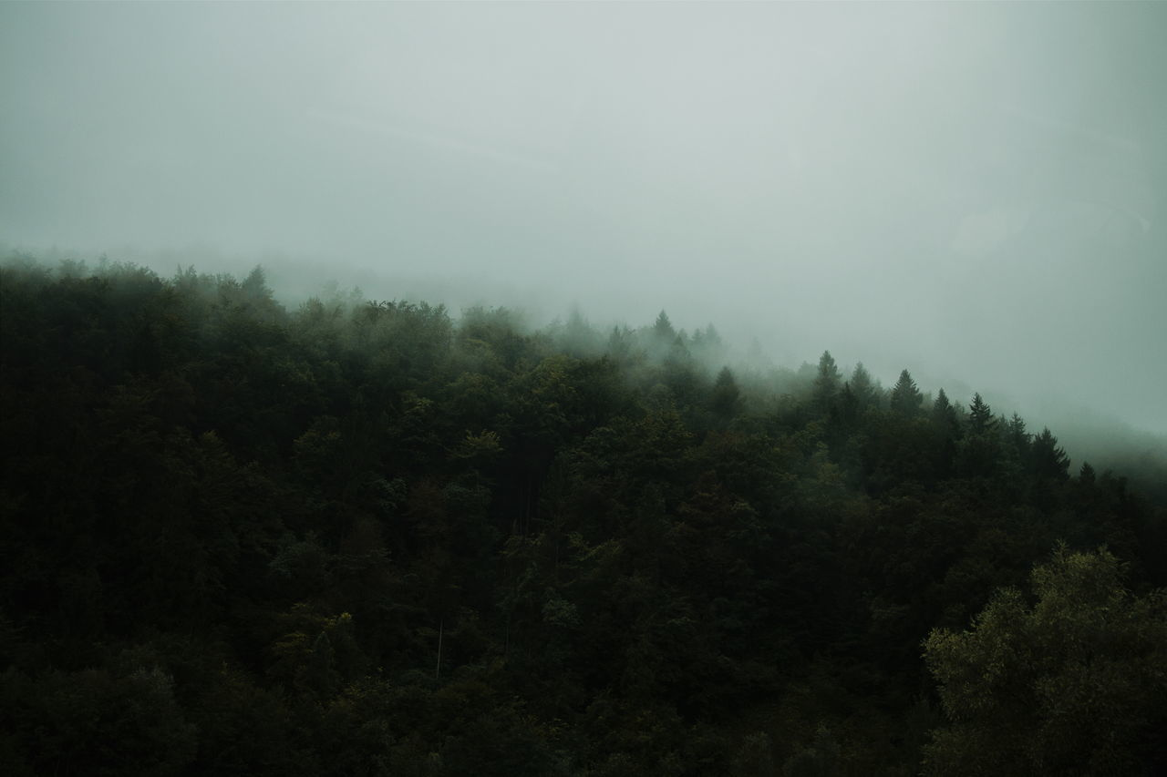 Tree Tranquil Scene Tranquility Growth Scenics Beauty In Nature Nature WoodLand Sky Fog Non-urban Scene Dark Foggy Outdoors Day Mountain No People High Section Outline Taking Pictures Nature Landscape Photography Minimalism Foggy Day