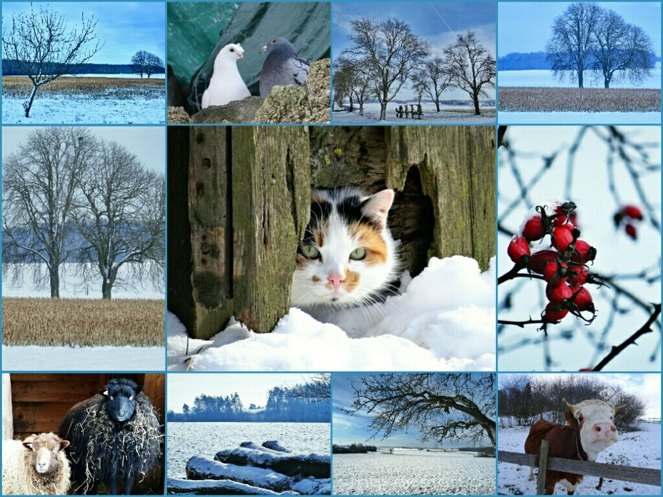 We are in Holidays a big Snowball for all of you! Wintertime Enjoying Life Creative Power OpenEdit Popular Photos Tadaa Community Taking Photos AMPt Community Winter Wonderland