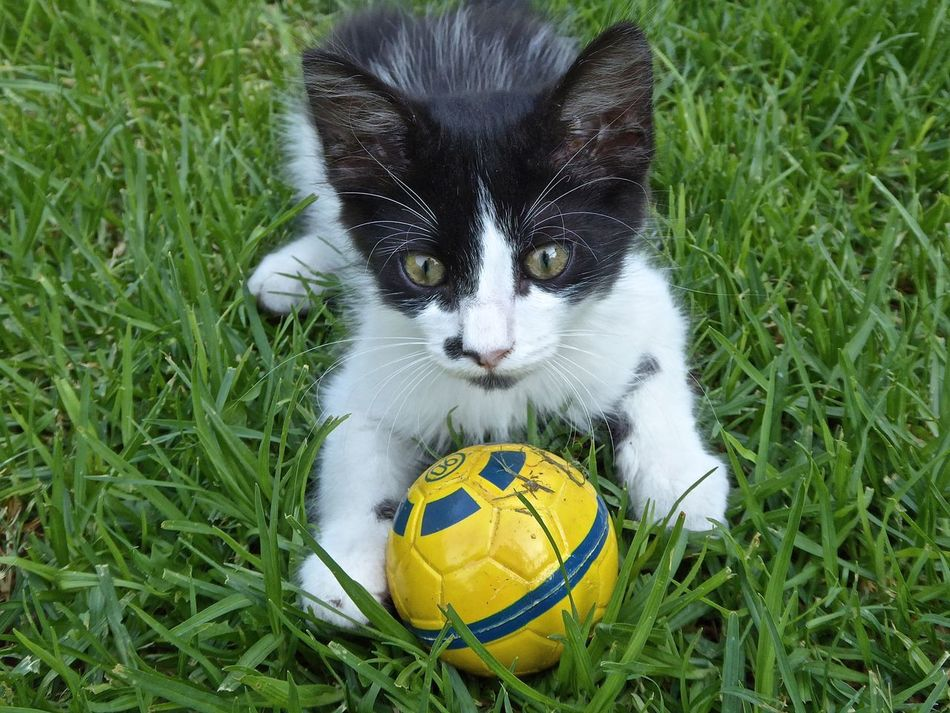 Cat Cats Kitten Kittens Black And White Cat Blackandwhitecat Kitten 🐱 Cute Cat Cute Cats Kittens <3 How Cute