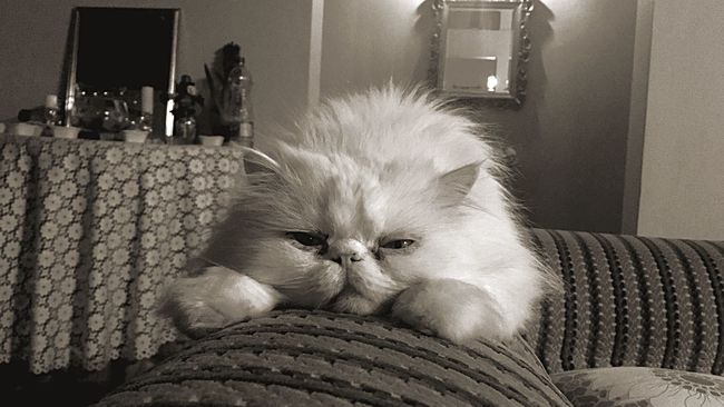 Let Me Sleep !!! Persiancat Adorable